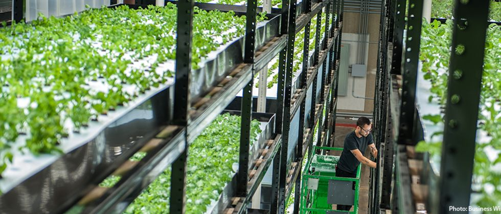 Growing Agriculture Markets with Vertical Farms